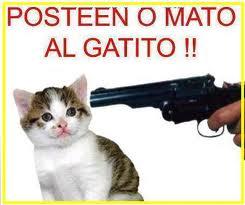 Forzar o mato al gatito